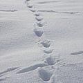 B-雪地6.jpg