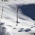 B-雪地18.jpg