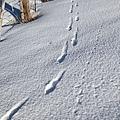 B-雪痕5.jpg