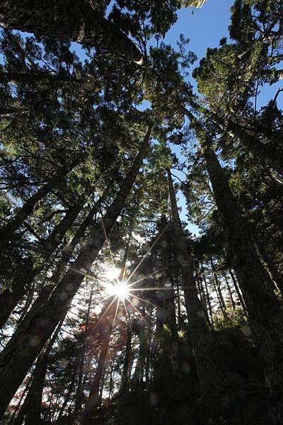6雪山黑森林1.jpg