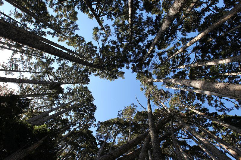 雪山黑森林2.jpg