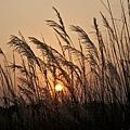 B風中夕陽