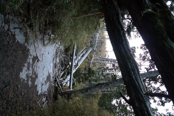不只地上連枯木上都結霜