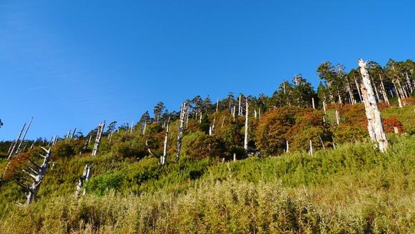 369後面的白木林