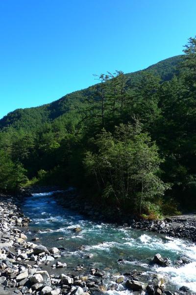 這段旅程就在看著七家灣溪中悠游地櫻花鉤吻鮭裡結束
