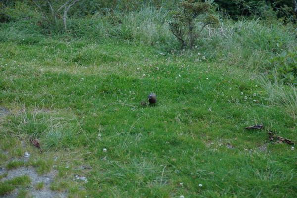 不知名的小鳥…