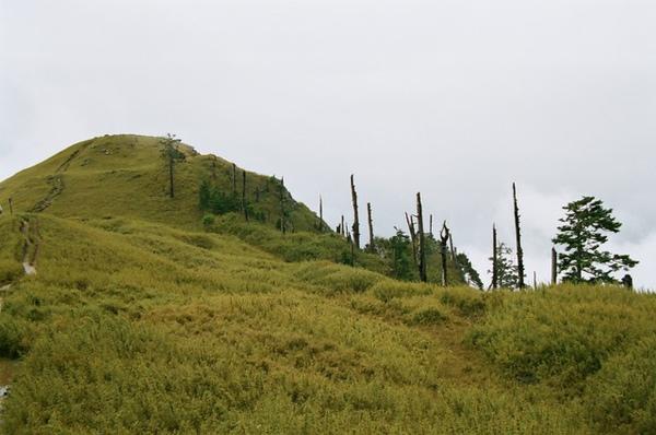 雪東與枯木群