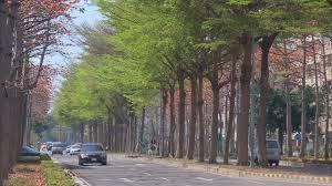 「行道樹」的圖片搜尋結果