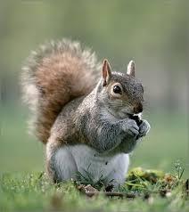「松鼠」的圖片搜尋結果