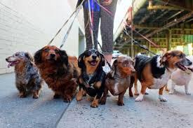 「ryan stewart dog」的圖片搜尋結果