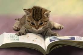 「閱讀小說」的圖片搜尋結果