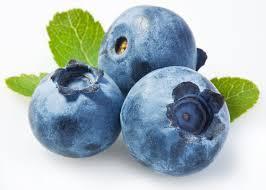 「blue berry」的圖片搜尋結果