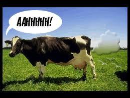 「cow & gas」的圖片搜尋結果