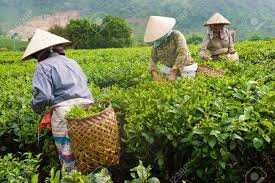 「vietnam tea」的圖片搜尋結果