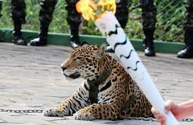 「brazil jaguar Juma」的圖片搜尋結果