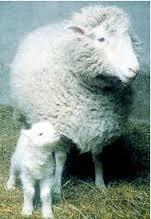 「桃莉羊」的圖片搜尋結果