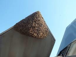「f22 & bee」的圖片搜尋結果