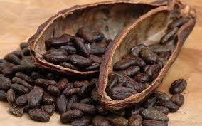 「可可豆」的圖片搜尋結果