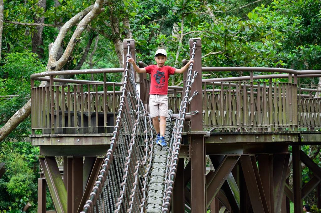 知本國家森林遊樂 獨木橋