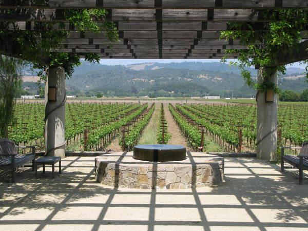 Heitz Cellar Winery 的葡萄園