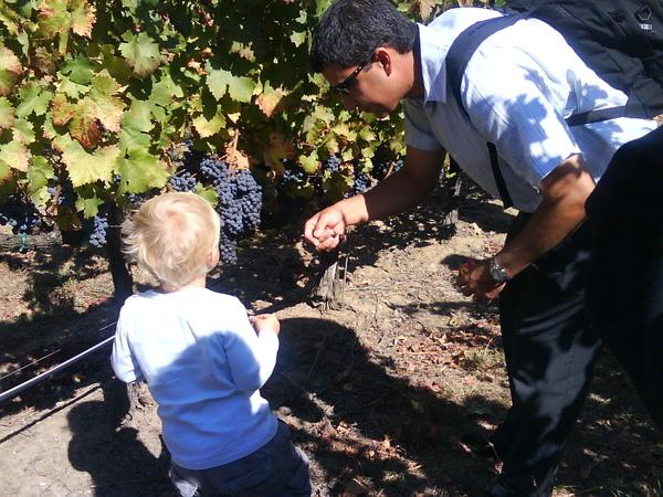 Monticello Vineyard: cute boy and his dad