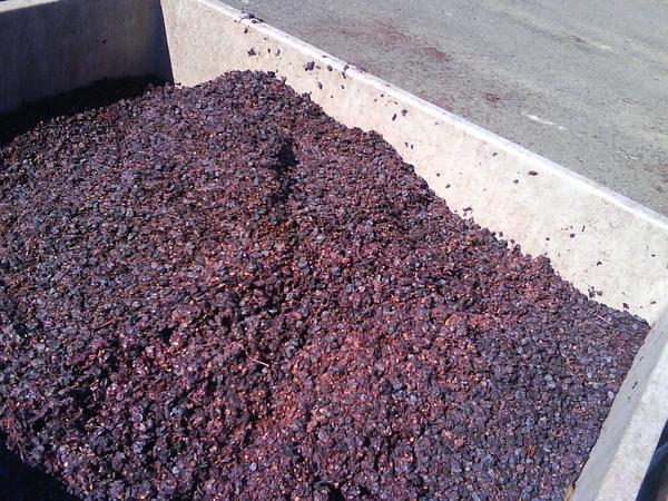 Monticello: wine-making (2008 fall)