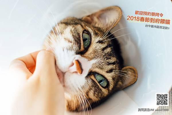 _CAT5841 copy.jpg