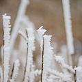 長雪的小草