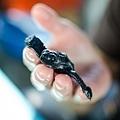 2013 Sea Turtle MX-002-5