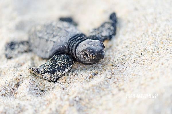 2013 Sea Turtle MX-002-124