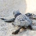 2013 Sea Turtle MX-002-148
