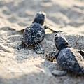 2013 Sea Turtle MX-002-166