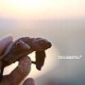 2013 Sea Turtle MX-002-379