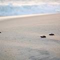 2013 Sea Turtle MX-003-19