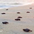 2013 Sea Turtle MX-003-22