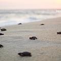 2013 Sea Turtle MX-003-35