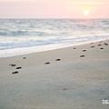 2013 Sea Turtle MX-003-55