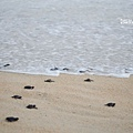 2013 Sea Turtle MX-003-65