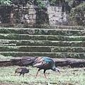 2013 July Tikal Guat-002-36.jpg