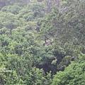 2013 July Tikal Guat-002-56.jpg