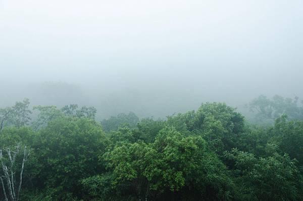[瓜地馬拉]漂浮在空中的金字塔瑪雅古城Tikal –