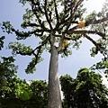 2013 July Tikal Guat-002-153.jpg