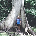 2013 July Tikal Guat-002-154.jpg