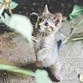 2013 July Tikal Guat-003-9.jpg