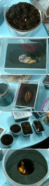 2009 05 17-07甲蟲.jpg