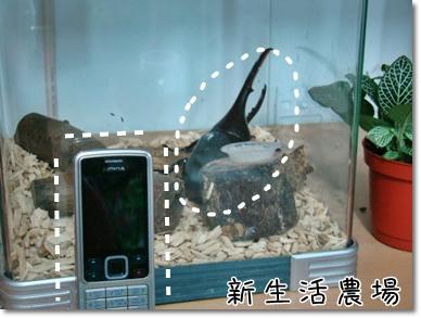 2009 05 17-20甲蟲.JPG