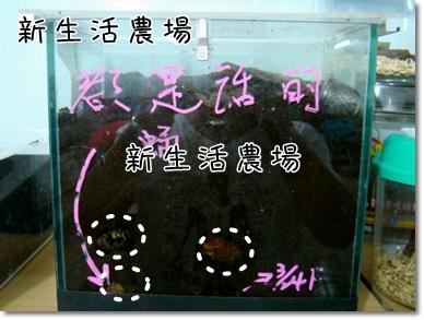 2009 05 17-21甲蟲.JPG