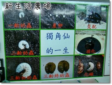 2009 05 17-22甲蟲.JPG