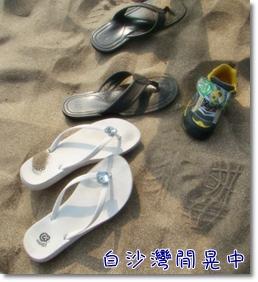 2009 05 17-49甲蟲.JPG