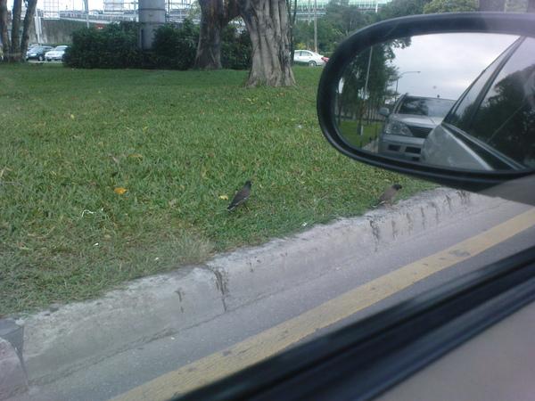 早起的鳥兒有蟲吃